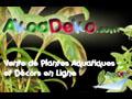 Vente Plantes d'Aquarium et Aquatiques